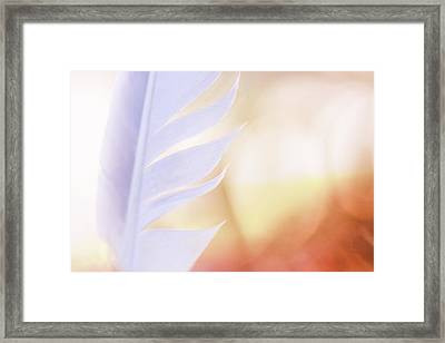 Backed By Beauty Framed Print