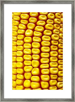 Background Corn Framed Print by Carlos Caetano
