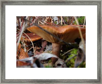 Background Focus Framed Print by Tingy Wende