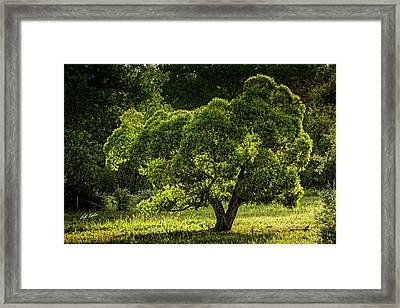 Backlit And Green Framed Print