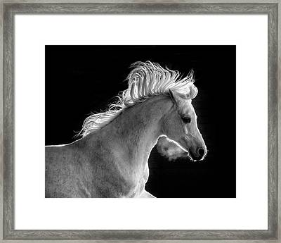 Backlit Arabian Framed Print by Wes and Dotty Weber