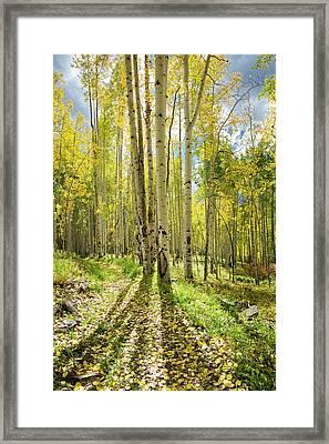 Backlit Aspen Trail Framed Print