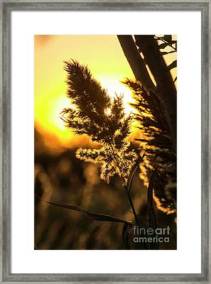 Framed Print featuring the photograph Backlit By The Sunset by Zawhaus Photography