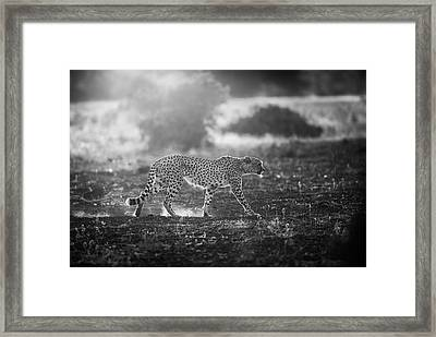 Backlit Cheetah Framed Print