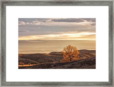 Backlit Cottonwood Framed Print