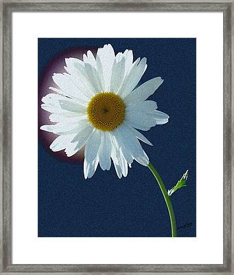 Backlit Daisy Framed Print