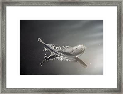 Backlit Feather Framed Print