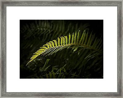Backlit Firn Framed Print by Jean Noren