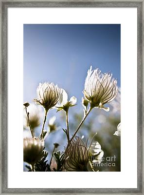 Backlit Fuzzy Flower Framed Print by Ray Laskowitz - Printscapes