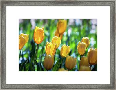 Backlit Framed Print by James Barber