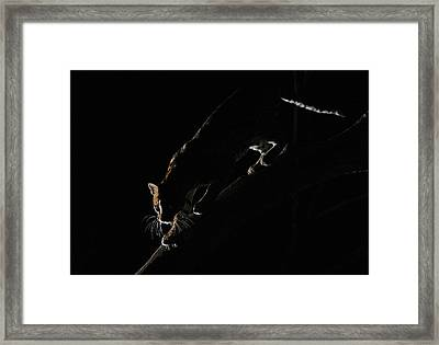 Framed Print featuring the photograph Backlit Ocelot by Wade Aiken