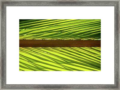 Palm West Framed Print