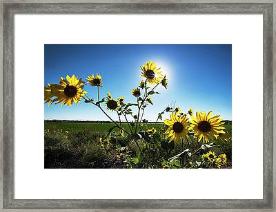 Framed Print featuring the photograph Backlit Sunflower 1 by Dave Dilli
