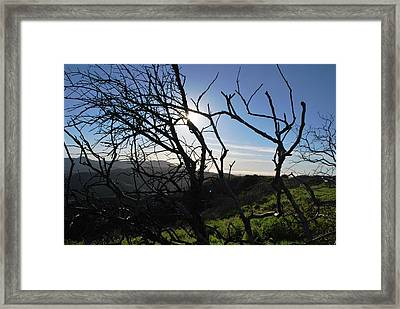 Framed Print featuring the photograph Backlit Trees Overlooking Hillside by Matt Harang