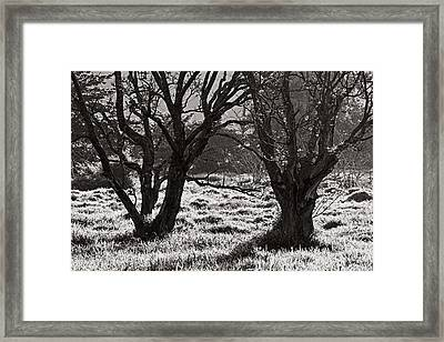 Backlit Trees- St Lucia Framed Print by Chester Williams