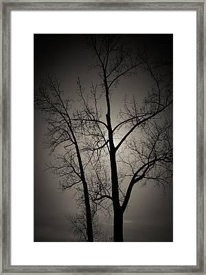 Backlit Trees Framed Print