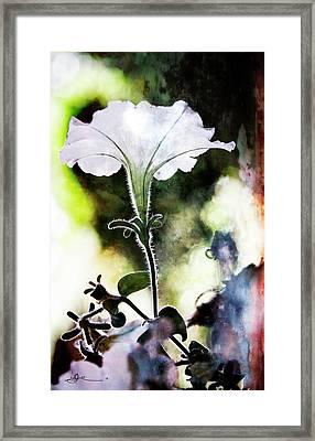 Backlit White Flower Framed Print
