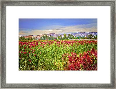 Backroad Beauty In Southern California Framed Print