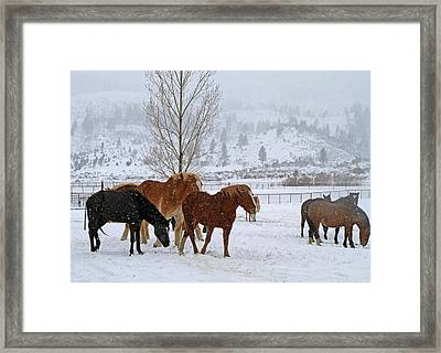 Backs To The Wind Framed Print by Donna Kennedy