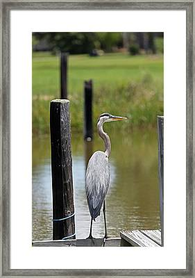 Backwater Watch Framed Print by Ty Helbach