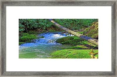 Backwoods Stream Framed Print