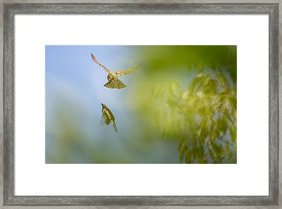 Backyard Framed Print