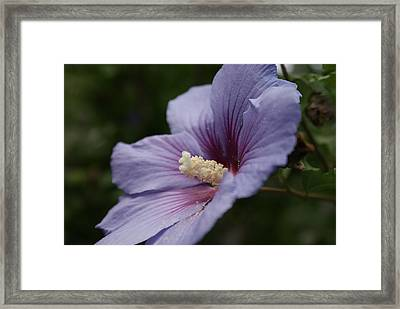 Framed Print featuring the photograph Backyard Beauty by Lois Lepisto