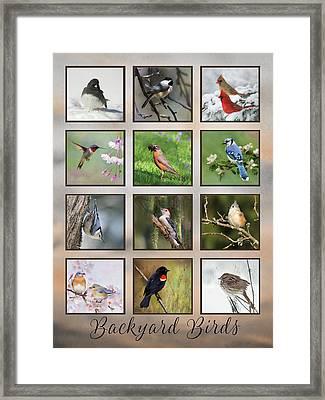 Framed Print featuring the photograph Backyard Birds by Lori Deiter