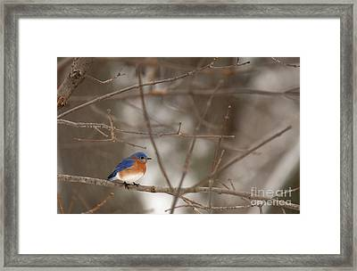 Backyard Blue Framed Print