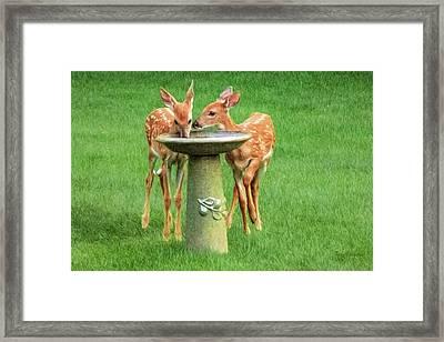 Backyard Bubbler Framed Print