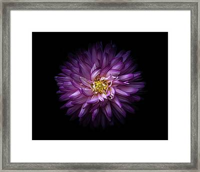 Framed Print featuring the photograph Backyard Flowers 20 Color Version by Brian Carson