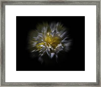 Framed Print featuring the photograph Backyard Flowers 25 Color Flow Version by Brian Carson