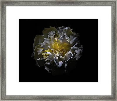 Framed Print featuring the photograph Backyard Flowers 25 Color Version by Brian Carson