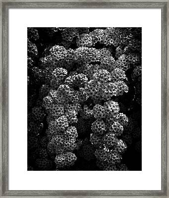 Framed Print featuring the photograph Backyard Flowers In Black And White 21 by Brian Carson