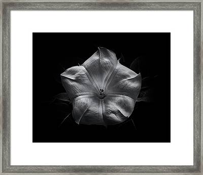 Framed Print featuring the photograph Backyard Flowers In Black And White 24 by Brian Carson