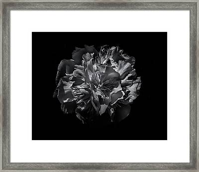 Backyard Flowers In Black And White 25 Framed Print by Brian Carson