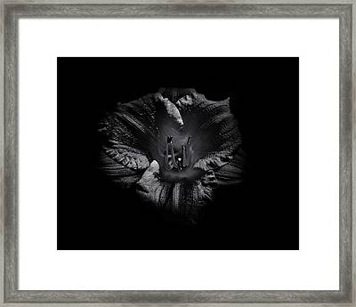 Framed Print featuring the photograph Backyard Flowers In Black And White 26 by Brian Carson