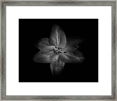 Framed Print featuring the photograph Backyard Flowers In Black And White 28 by Brian Carson