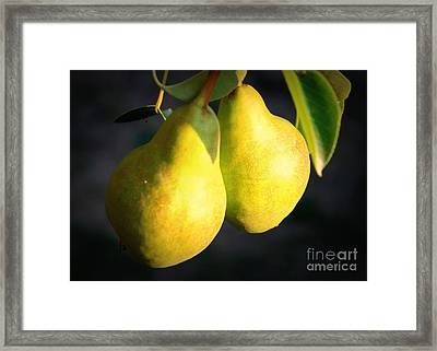 Backyard Garden Series - Two Pears Framed Print