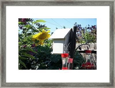 Backyard Garden Framed Print