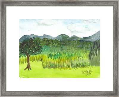 Backyard In Barton Framed Print by Donna Walsh