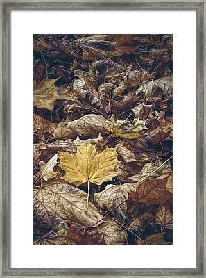 Backyard Leaves Framed Print