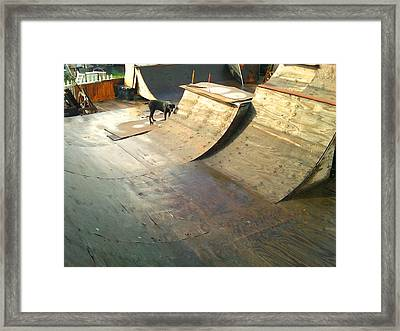 Backyard Transistions Framed Print by Douglas Kriezel