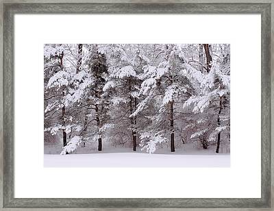 Framed Print featuring the photograph Backyard Trees by Don Nieman