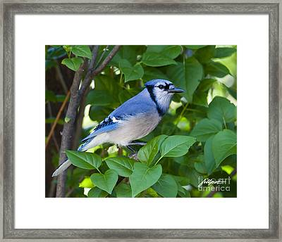 Backyard Visitor Framed Print