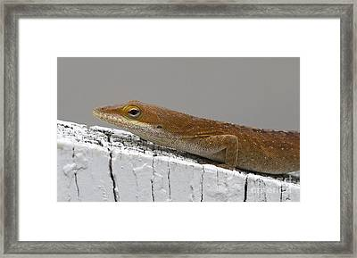 Backyard Visitor Framed Print