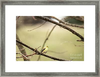 Backyard Yellow Framed Print