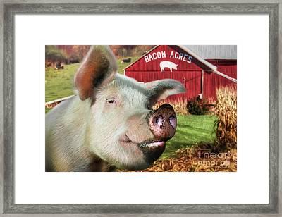 Bacon Acres Framed Print by Lori Deiter
