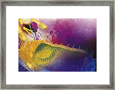 Bacteriophages Attacking Bacteria Framed Print by Claus Lunau