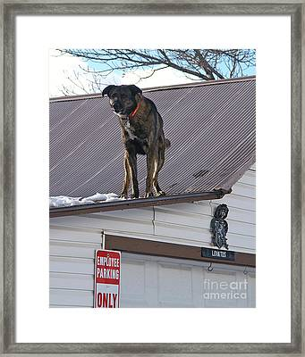 Bad Dog Framed Print by Jack Norton